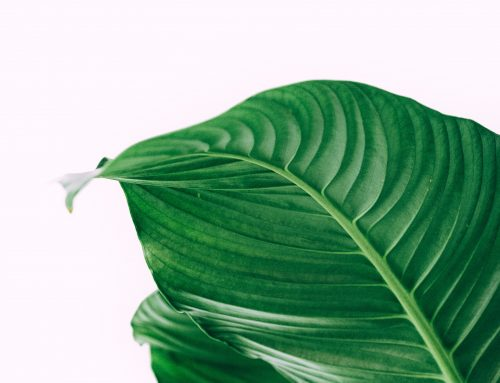 4 Activities To Help Turn Over a New Leaf