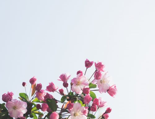 Spring: A Time for Balance and Renewal