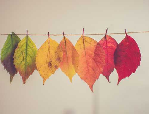 Autumn leaves are now falling…but how are you doing?